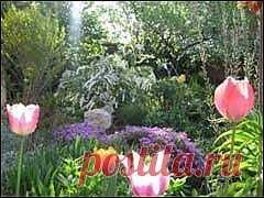 sady045.jpg (изображение «JPEG», 240×180 пикселов)