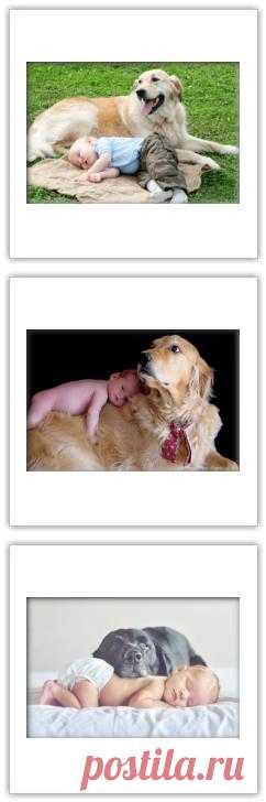 Хорошо когда собака друг,но плохо когда наоборот.