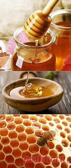 Почему мед хранится вечно?