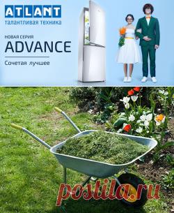 Как мульчировать травой, чтоб повысить урожай / Асиенда.ру