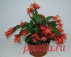 http://s30087890855.mirtesen.ru/blog/43231511676