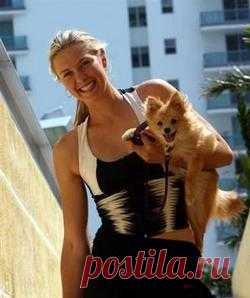 Шарапова: разговариваю с собакой по видеочату - 28 Мая 2013 - Знаменитости - Знаменитости