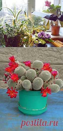 (+1) тема - Комнатные растения осенью: как ухаживать, как поливать, какая освещенность им нужна | САД НА ПОДОКОННИКЕ