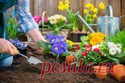Что сажать весной на даче Что лучше всего посадить в весенние месяцы на дачном участке, ведь не только овощи, но и много всего красивого и полезного можно выбрать для начинающегося сезона.