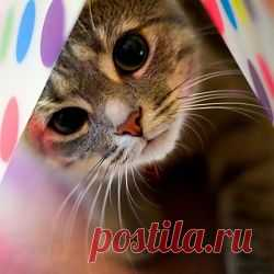 Ученые нашли необычное применение кошкам!