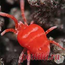Самые удивительные и полезные паразиты http://science.mirtesen.ru/blog/43553570299