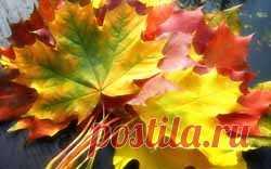 Четвертый выпуск журнала «Ароматы счастья» Вдыхаем осенние ароматы   Блог Ирины Зайцевой