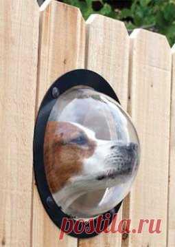 Любопытному псу окно в заборе поставили.