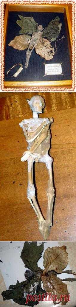 мумия феечки