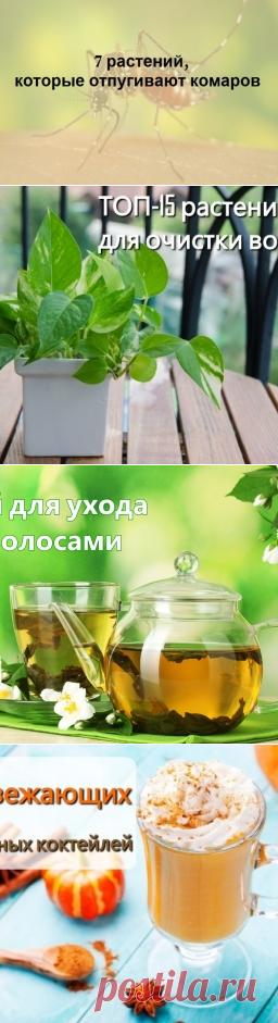 7 растений, которые отгоняют комаров на ура.