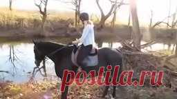 видео про лошадей скачать бесплатно