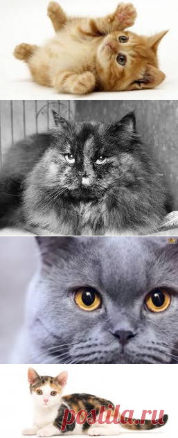 PICTURES OF CATS - Google Search