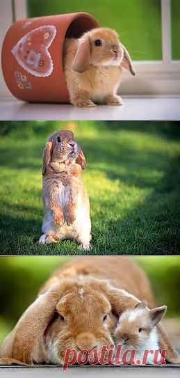 Как ухаживать за декоративным кроликом? | Домохозяйки