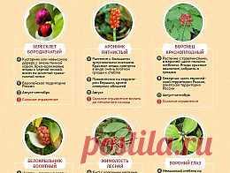 Осторожно, ягоды! Чем можно отравиться в лесу - Продукты и напитки - Кухня - Аргументы и Факты: http://www.aif.ru/food/article/64550