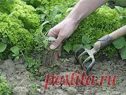 По сорнякам на участке можно определить качество почвы? - Вопрос-ответ - Аргументы и Факты