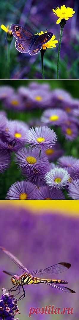 Фиолетовое настроение: вдохновляемся цветом