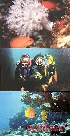 Журнал Октопус 1998 год | Дайвинг и подводный мир