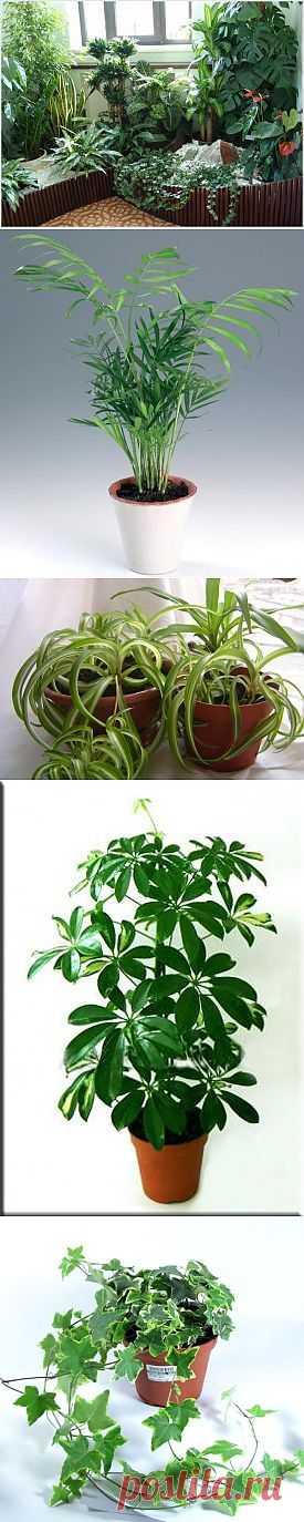 7 комнатных растений, очищающих воздух в квартире