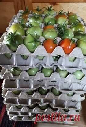 Как использовать яичные лотки для более длительного и бережного хранения овощей