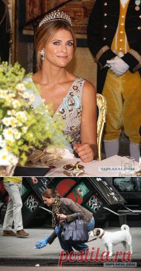 """Yaplakal.com on Twitter: """"Где-то в параллельной вселенной Ничего особенного, просто принцесса Швеции Мадлен, герцогиня Гельсингландская и Гестрикландская убирает за своей собакой на улице города. https://t.co/HpdJQvLGv8 https://t.co/VP7ivk6mWb"""" / Twitter"""