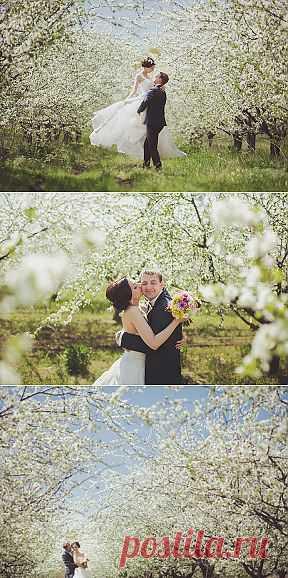 Весеннее очарование: свадьба Ольги и Алексея - WeddyWood