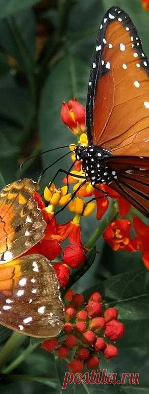 Хрупкая бабочка