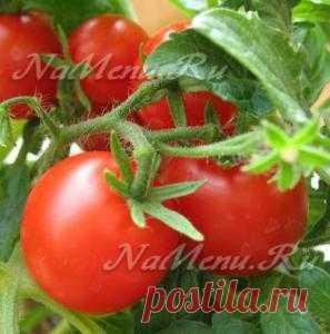 Когда сажать помидоры в 2013 году