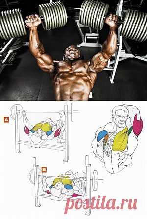 Упражнения для груди | Sport My Way | Sport - My Way