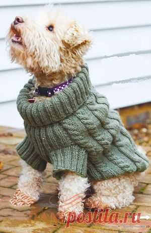 свитер для собачки вяжем спицами свитер для собаки украшен косами