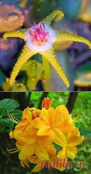 Самые необычные цветы Земли.