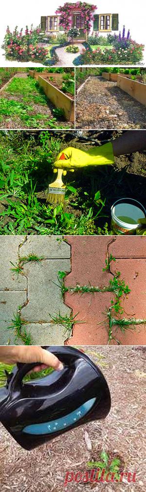 Как уничтожить сорняки без химии