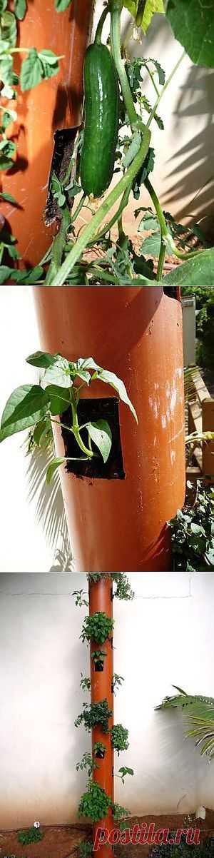 Как вам такой способ выращивания огурцов?. Так ведь можно и на балконе плантации огуречные разводить? Вертикальная посадка - отличное решение и для маленьких садовых участков.
