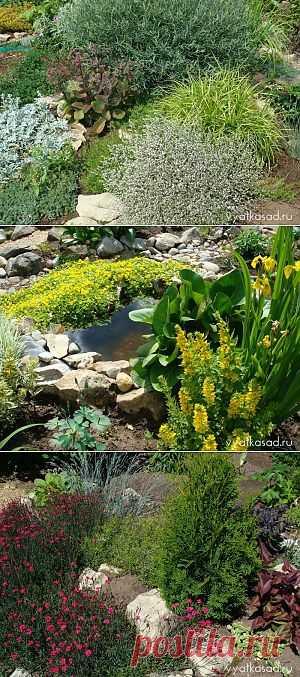 Экономим на посадочном материале. Какие способы можно использовать в оформлении садового участка, экономя при этом на денежных расходах?