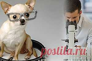 Российские ученые доказали, что собаки различают цвета