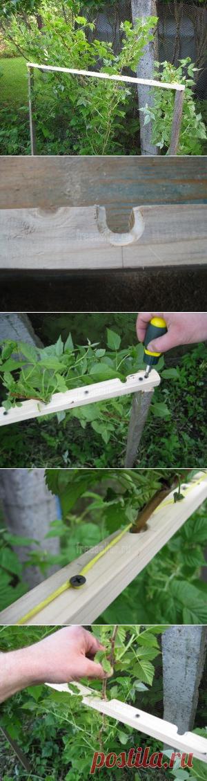 Приспособление для подвязки малины и ежевики