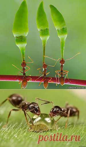 Способы борьбы с муравьями на участке и в доме.