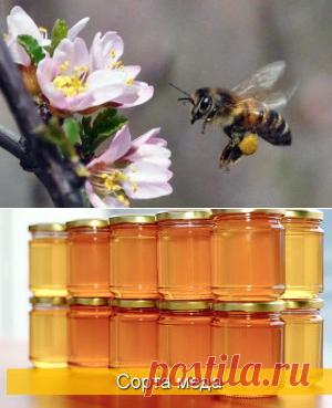 Дождь и холод не помеха пчелам Татарстана - БиоКорова