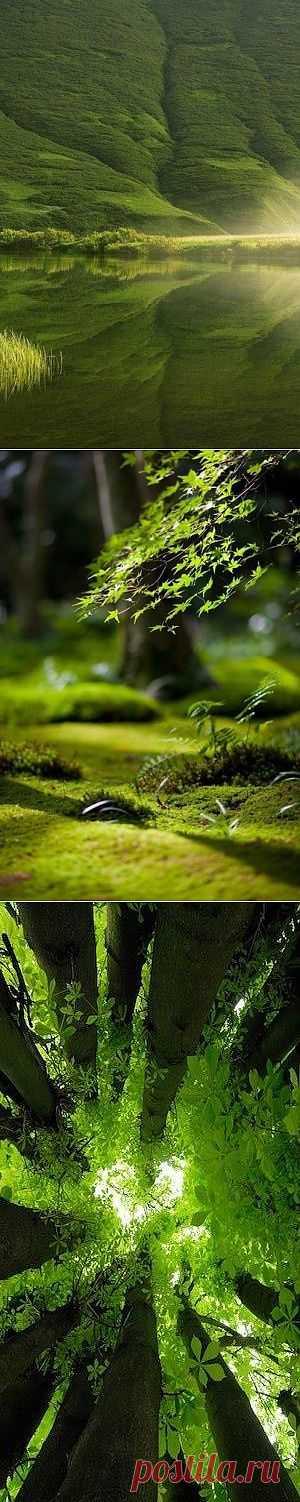 Когда ты в лесу, ты становишься частью леса. Весь, без остатка. Попал под дождь — ты часть дождя. Приходит утро — часть утра. Вот так. Если вкратце. (с)