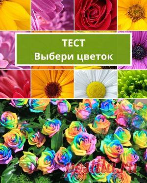 Тесты по картинкам: выбери цветок и узнай сильные стороны   Психология