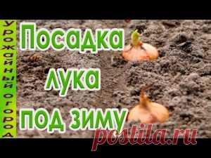 Посев семян лука, чеснока, зелени и корнеплодов под зиму | Дача - впрок