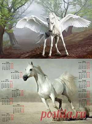 Год 2014 — год Лошади: что означает символ лошади (коня)? Подборка фотографий (65 фото лошадей). Фотокалендарь 2014 | Informatio.ru
