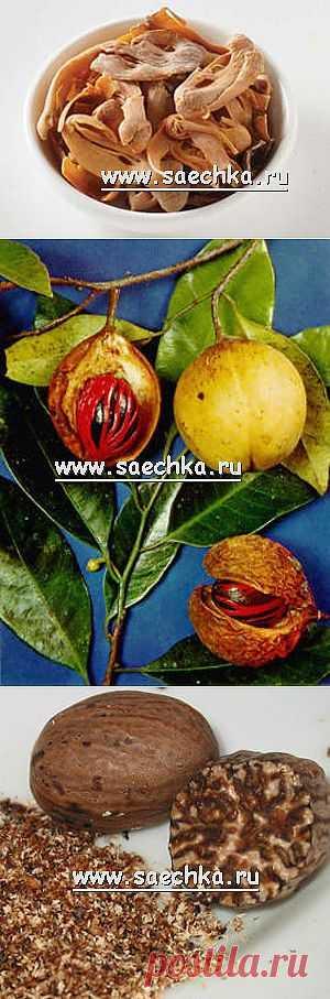 Мускатный орех и мускатный цвет | Saechka.Ru - рецепты с фото