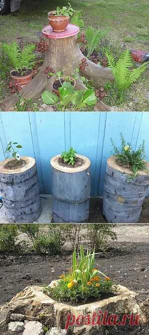 Примените пни деревьев в украшении ландшафта. Фото | Дача - впрок