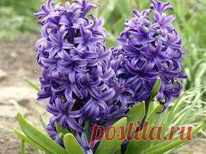 Разновидности весенних цветов, правильная посадка и уход за клумбами весной Высаживаем и оформляем цветочные клумбы весной. Какие цветы лучше высаживать и как за ними ухаживать, как оформлять весенние клумбы