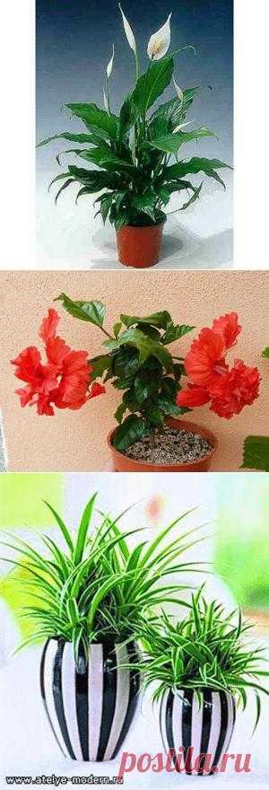 10 комнатных растений для семейного счастья. Комментарии