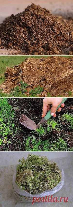 Виды земли для рассады | Дача - впрок