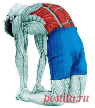 Анатомия стретчинга в картинках: упражнения для всего тела - Женская страница