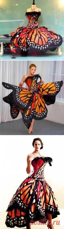 Flight of a butterfly