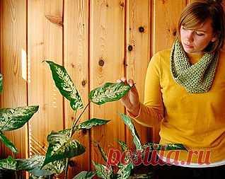 Самые неприхотливые комнатные растения – выращивание, фото комнатных растений | Любимые цветы