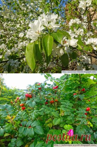 Скромная и изящная скандинавско-балтийская флора (часть 2)